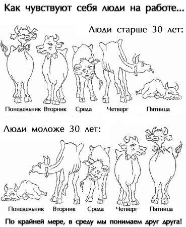veselaja_kartinka_10082009_9.jpg