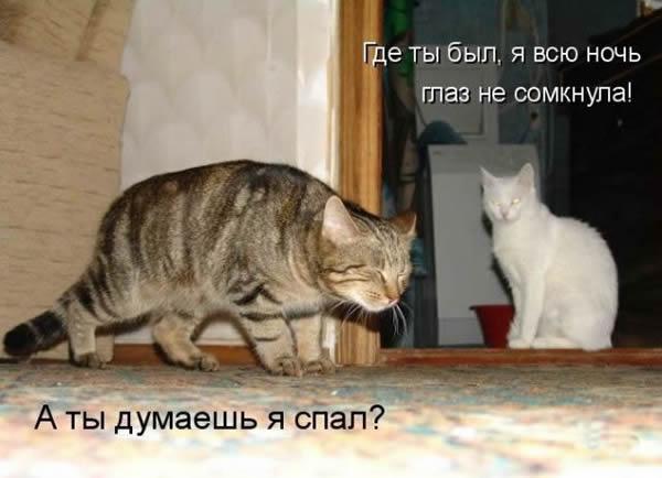 как долго кот может не приходить домой